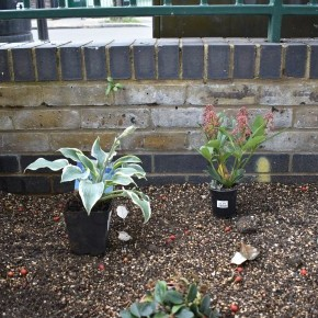 How does a garden grow?