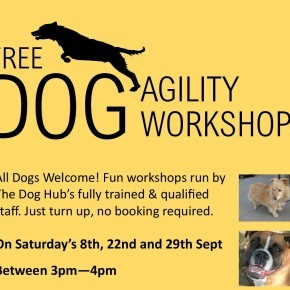 Free Dog Agility Workshops