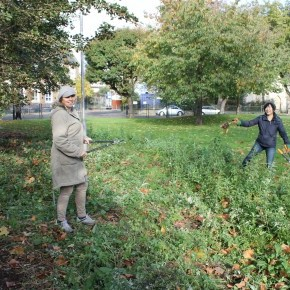 Tree planting prepraration