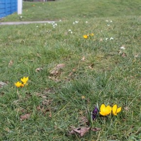 BULBS- Spring is on the way!