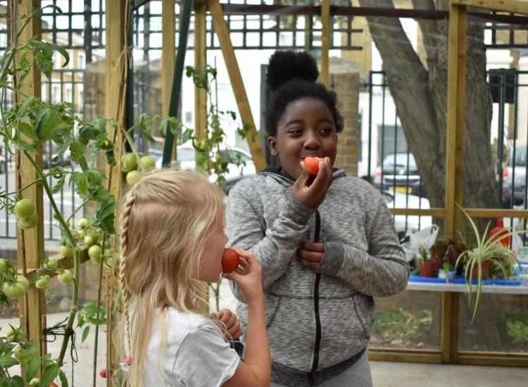Food Growing Fun Workshop