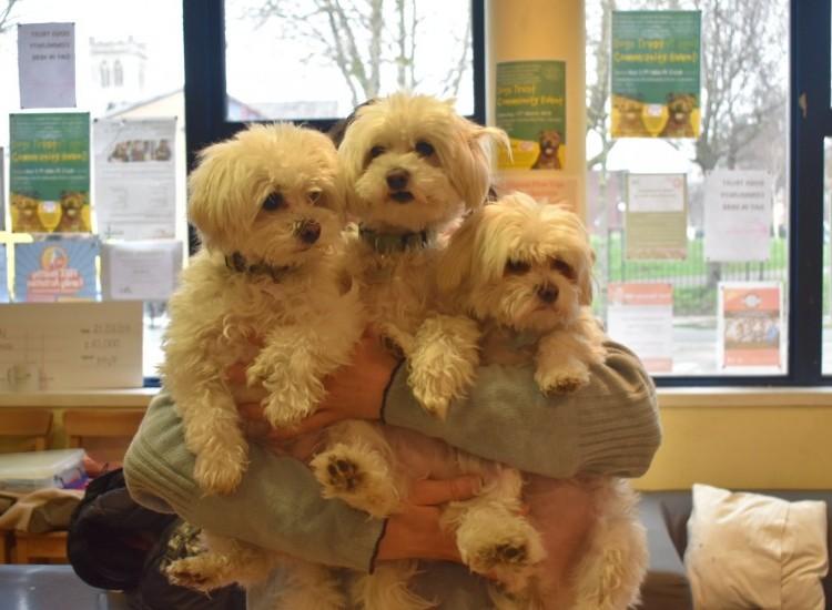 17 Dogs Visit Castlehaven